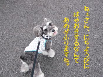あさんぽ1.jpg