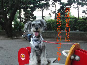 町田公園2.jpg